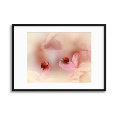 Ladybirds on Pink Hydrangea by Ellen van Deelen Framed Print - Ustad Home
