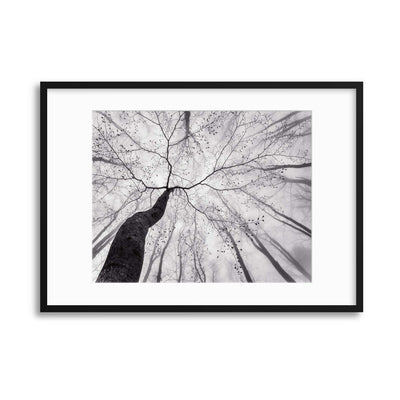 A View of the Tree Crown by Tom Pavlasek Framed Print - Ustad Home
