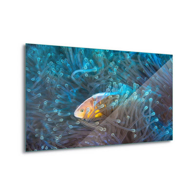 Skunk Clownfish by Barathieu Gabriel Glass Print - Ustad Home