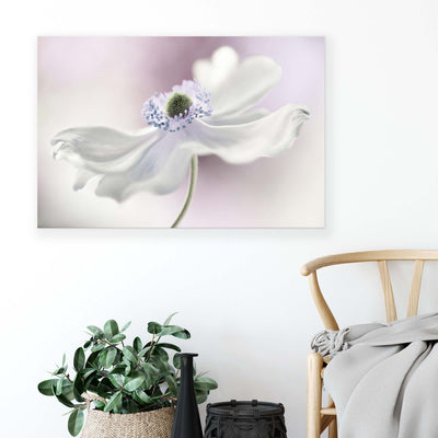 Anemone Breeze by Mandy Disher Canvas Print - Ustad Home