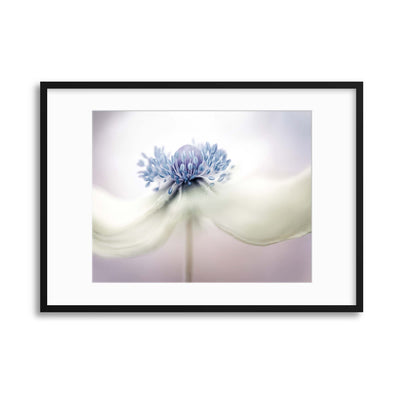 Anemone by Mandy Disher Framed Print - Ustad Home