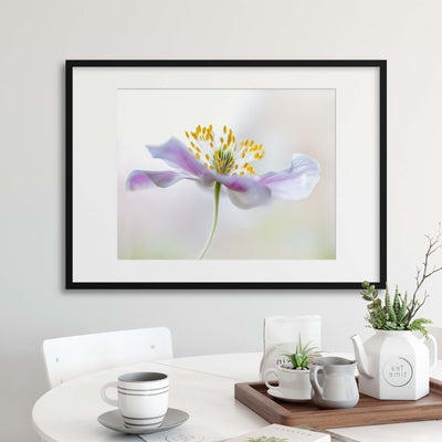 Wood Anemone by Mandy Disher Framed Print - Ustad Home