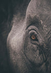 Elephant Eye Framed Print - Ustad Home