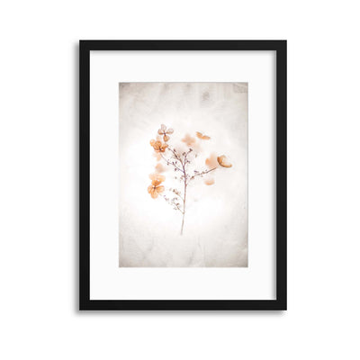 Delicate Shadows Collection No.10 Framed Print - Ustad Home