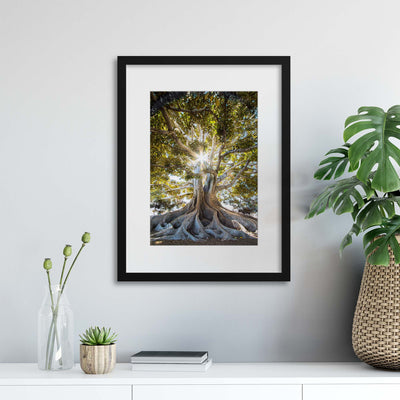Rooted in Time Framed Print - Ustad Home