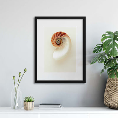 The Nautilus Framed Print - Ustad Home