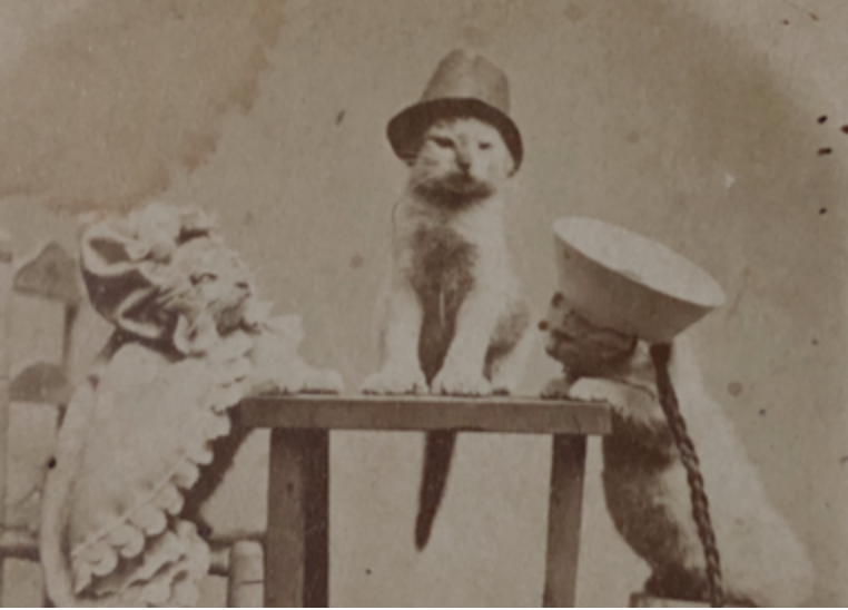 Antique Kitten Photo