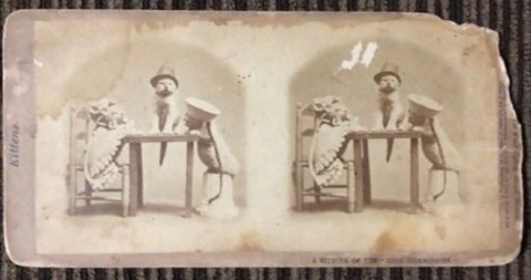 kittens stereoview cards