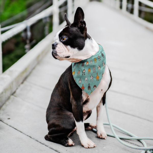 Happy Tails Dog Bandana - Aqua