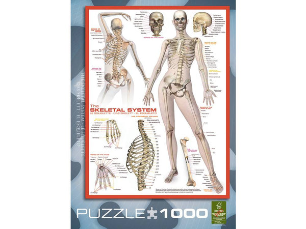 Eurographics 1000pc The Skeletal System