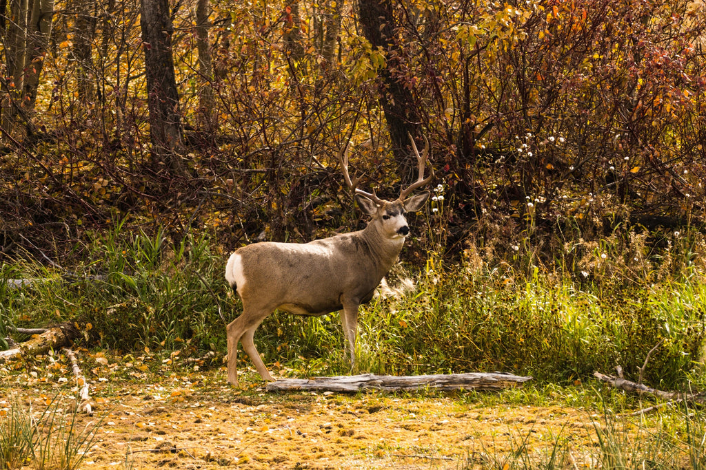 Do You Need a License for Bow Hunting? Everything You Need to Know About Bow Hunting