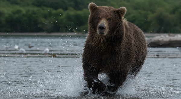 Is It Legal To Hunt Bears in the US
