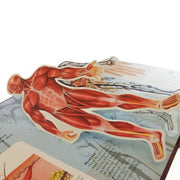 3-D Explorer: Anatomy of The Human Body (English)