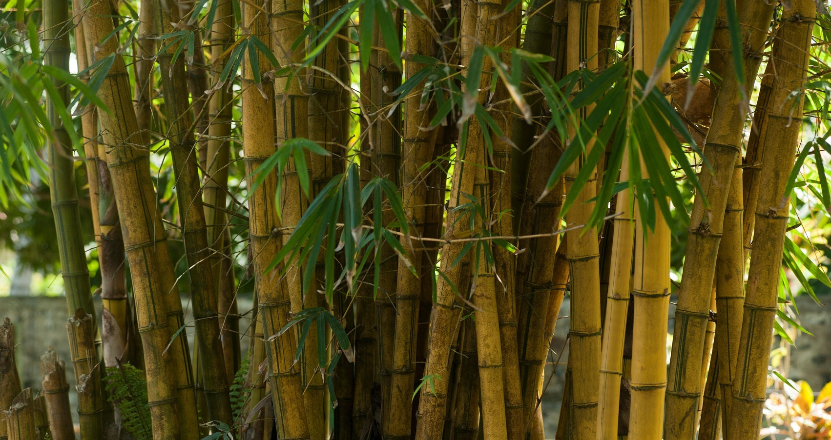 How sustainable is bamboo?
