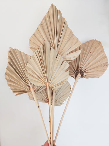 DRIED PALM LEAF SPEAR