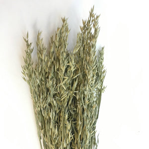 DRIED OAT GRASS