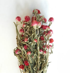 DRIED RED CLOVER FLOWERS