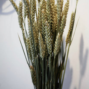 DRIED WHEAT GRASS