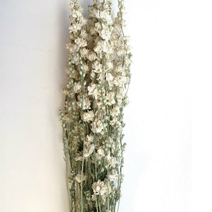 DRIED WHITE DELPHINIUM