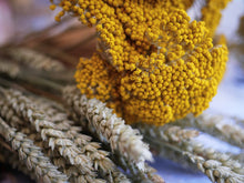 DRIED 'CLOTH OF GOLD' FLOWERS