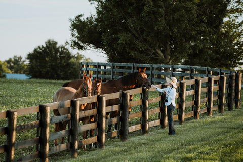 Things to do during a weekend in Lexington