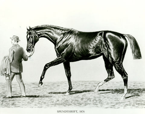 Spendthrift the horse