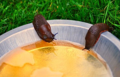 slugs and snails drinking beer