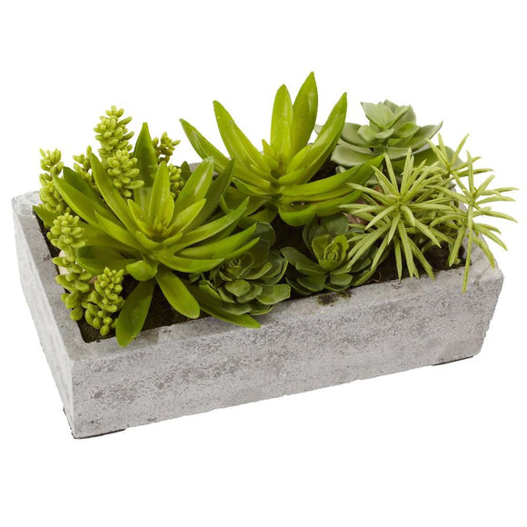 Succulent Garden in a Concrete Planter