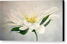 White Flower - Canvas Print - Jenny Bagwill Art
