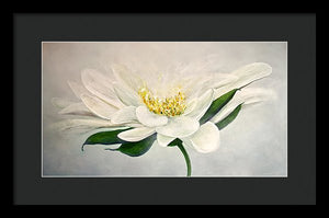 White Flower - Framed Print - Jenny Bagwill Art