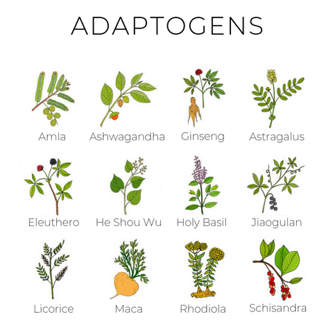 Using Adaptogens to Reduce Stress