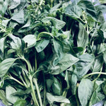 Basil / Sweet Basil (1/4 kilo) OWN FARM PRODUCE