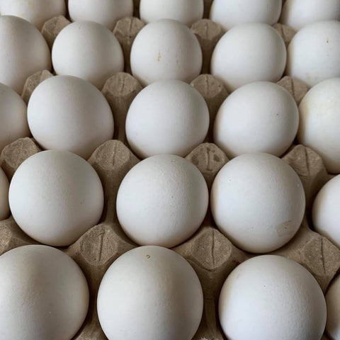 Egg / Fresh White Egg (Large 30 Pcs.)