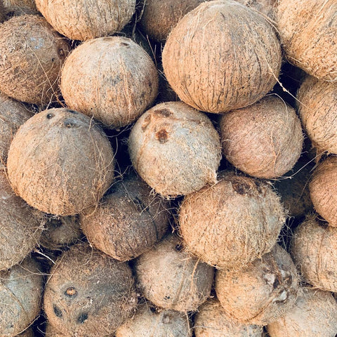 Coconut / Niyog Gata (Large Per Piece)