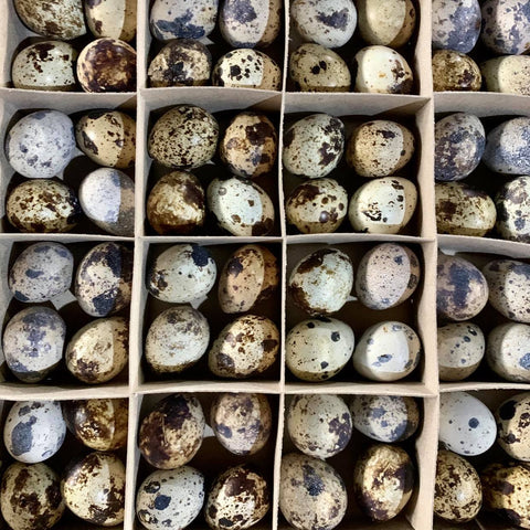 Egg / Quail Egg (100 pcs. / Per Box)