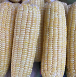 Corn Yellow / Sweet Corn (900g - 1.1 Kilo)