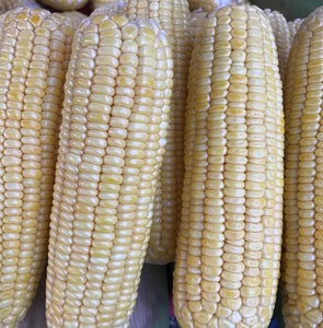 Corn Yellow ( Sweet Corn )  1 Kilo