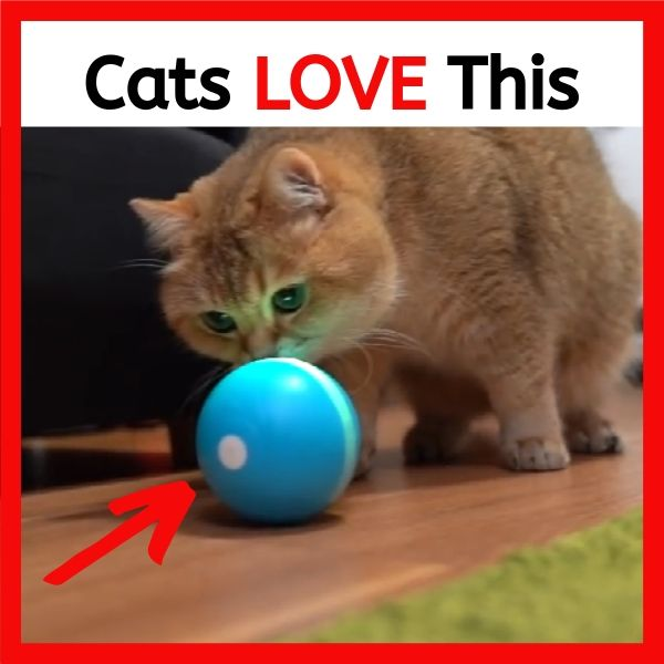 AdorablyCat Magic Ball>>Buy More Save More