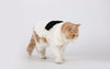 Elegant Fur Overcoat Pet Clothes