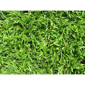 50 SQM LM Berea Evergreen Instant Lawn