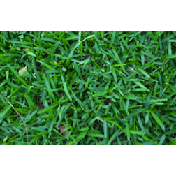 20 Sqm Buffalo Lawn Grass