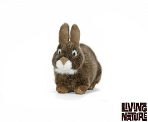 Living nature European Rabbit