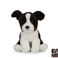 Living Nature Border Collie Puppy