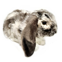 Living Nature Large Lop Eared Bunny