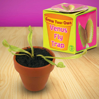 Tobar Grow Your Own Venus Fly Trap