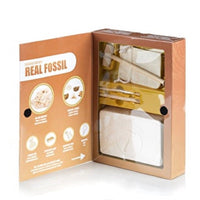Real Fossil Excavation Kit