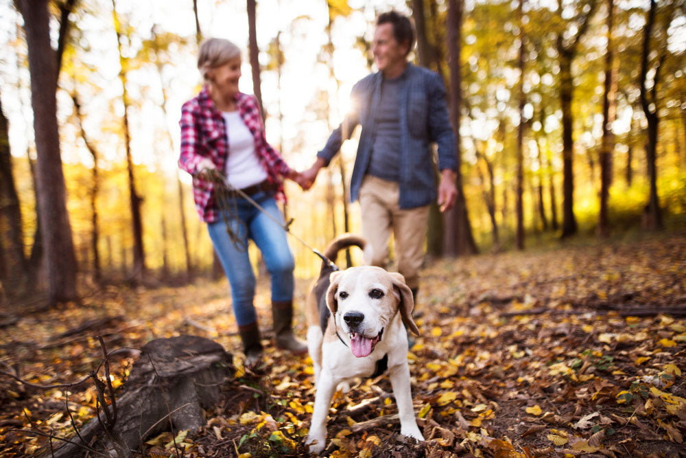 Couple on walk with senior dog in woods