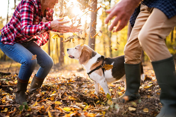 Couple playing with a senior dog in autumn leaves