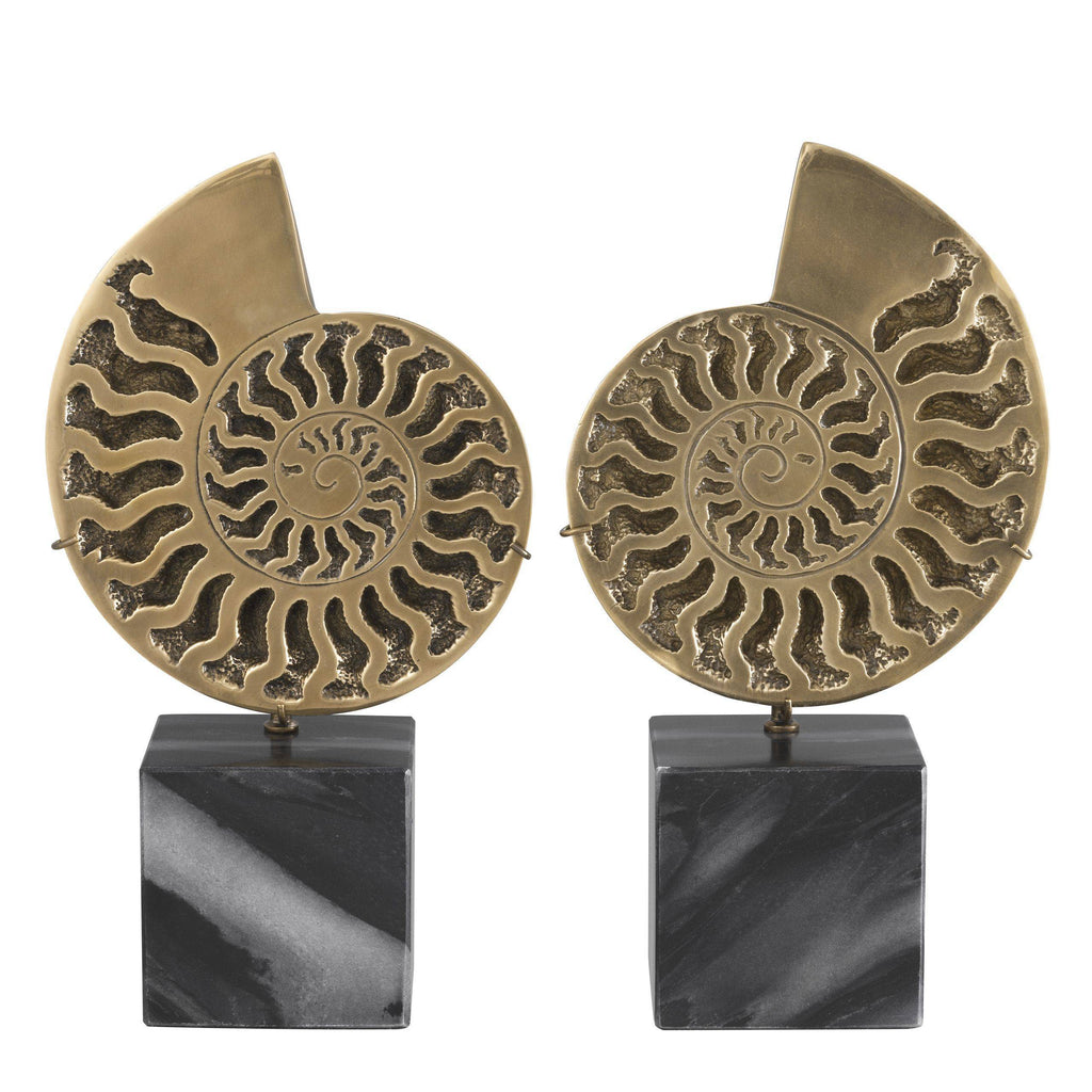 Decoration Ammonite set of 2