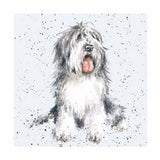 Kort - Old English Sheepdog